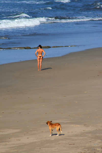 "our mascot ""Little Buddy"" walked to the beach with our guests this morning"